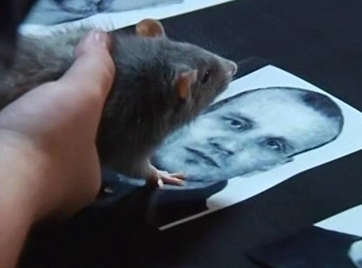 крыс Анубис быстро нашел убийцу