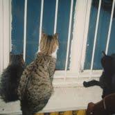 кошки Елены ждут новых рефералов